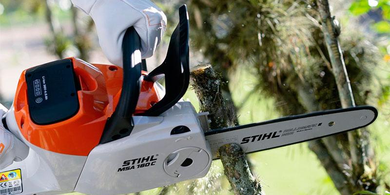Meio Ambiente orienta sobre multa por extração e poda drástica de árvores